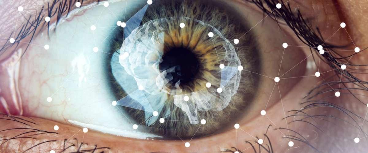 Kök Hücrelerden Işığa Tepki Veren Beyinler Üretildi